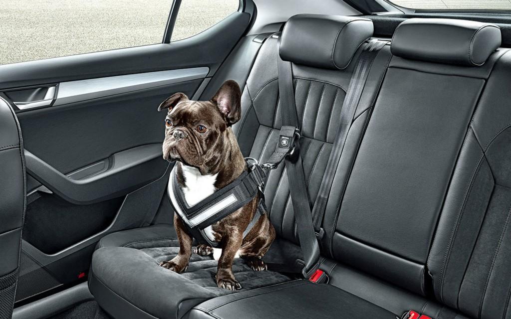 perros-dejar-encerrados-coche-3