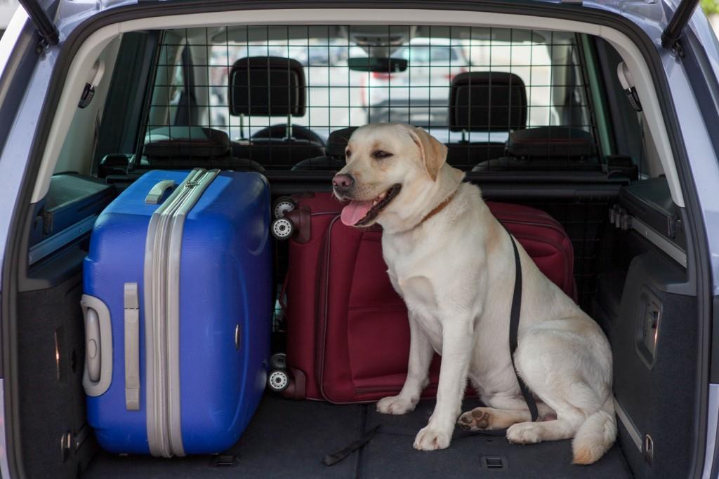 8 consejos a tener en cuenta para viajar con tu mascota de manera segura