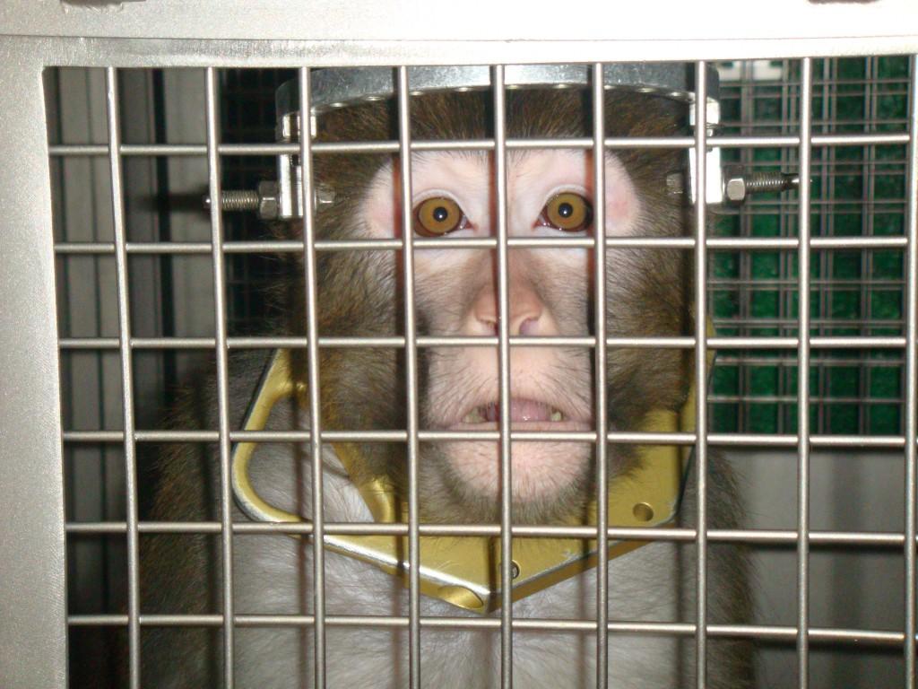escandalo-emisiones-monos-humanos-alemania-2