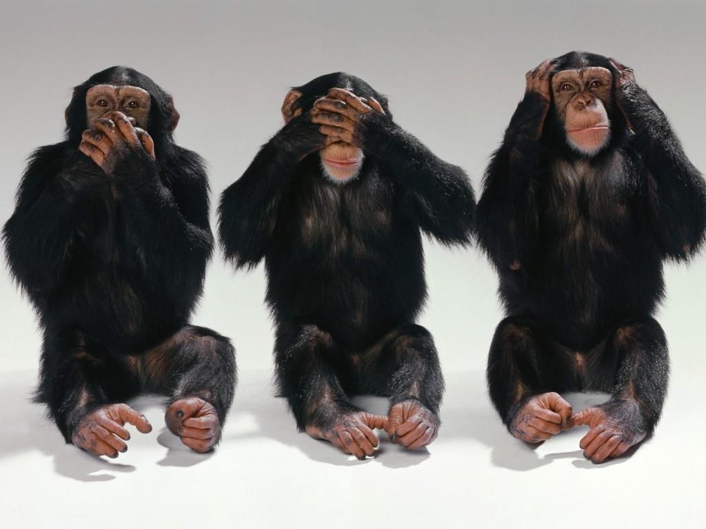 escandalo-emisiones-monos-humanos-alemania-4