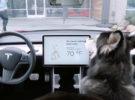 Si tienes mascota, Tesla quiere ayudarte a cuidarla mientras la dejas en el coche sola