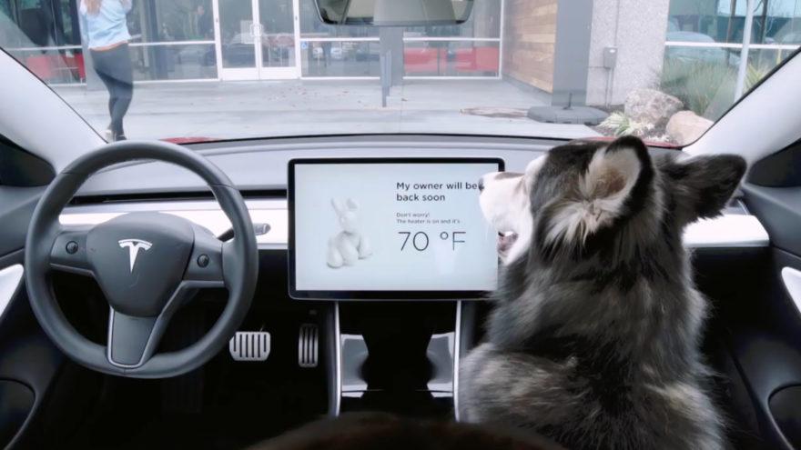 Antirrobo Sentry Tesla Dog Mode